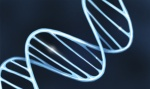 Scientists propose an algorithm to study DNA faster and more accurately